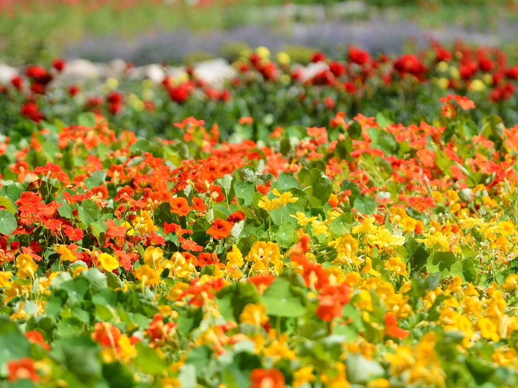 百花繚乱のフラワーガーデンで夏の想い出作りはいかがでしょう。