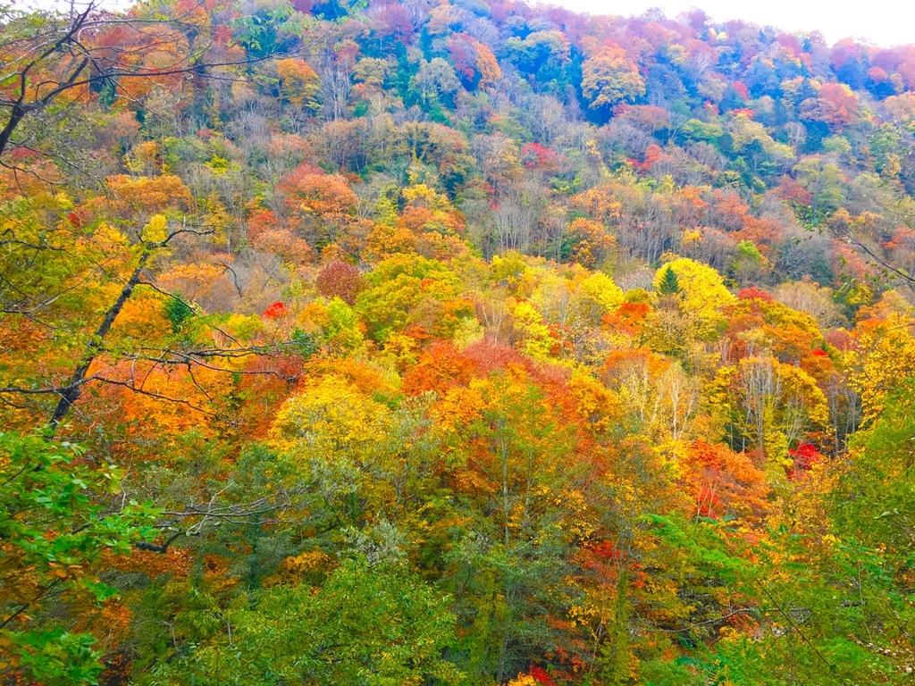 山が色づく季節。