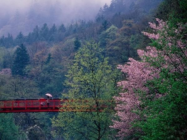 【周辺観光】〜春〜定山渓温泉の春の見所は木々が黄色やオレンジ等にに彩られる「春紅葉」。