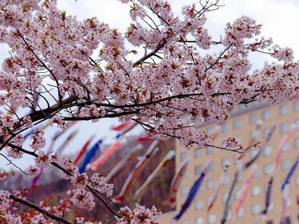 春の風物詩「渓流鯉のぼり」平成30年は4月14日(土)〜平成30年5月6日(日)開催予定
