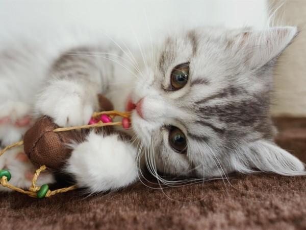 猫ちゃんも大歓迎ですよ☆
