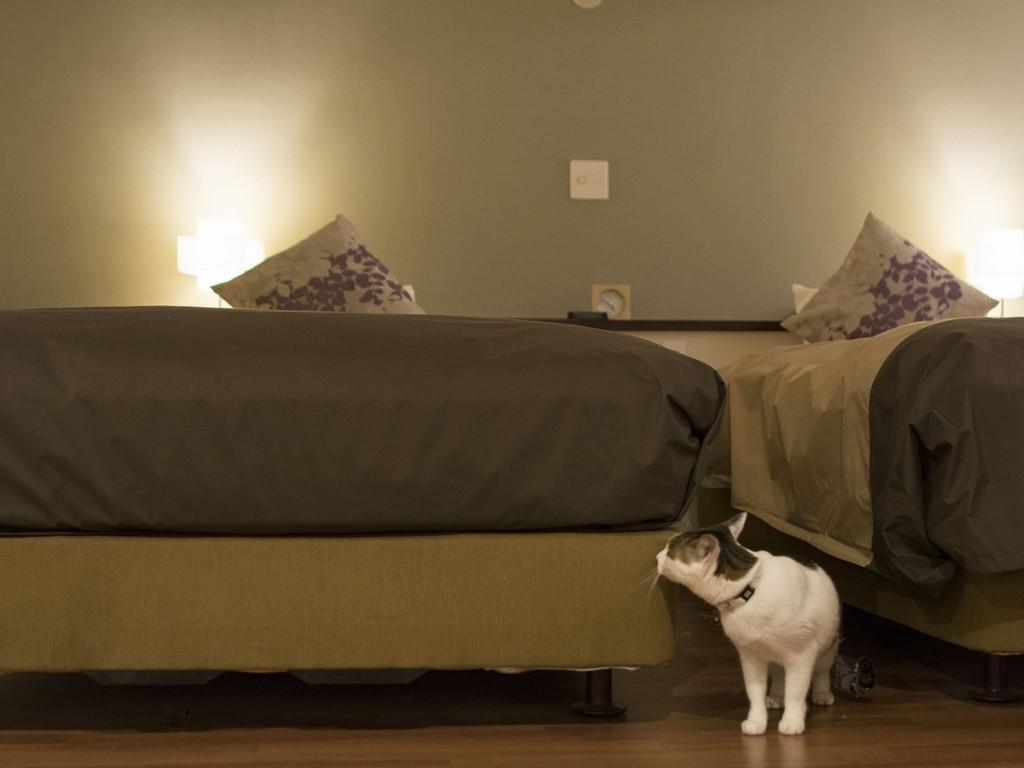 【萌黄の館】ペット専用ルーム〜大切なペットと一緒にお泊りできます