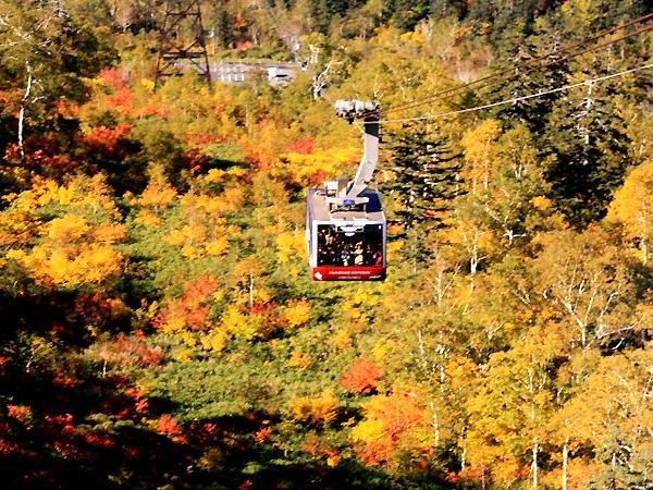 紅葉の中を進む秋の旭岳ロープウェイ