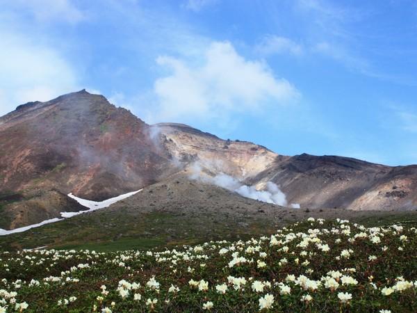 高山植物が咲き乱れる夏の旭岳