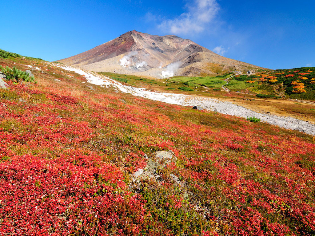 8月下旬から紅葉が始ま り、姿見駅周辺では、黄や赤に色付くナナカマドの紅葉が見事
