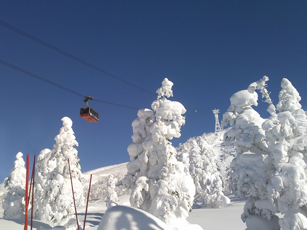 樹氷に積雪した姿は「スノーモンスター」と呼ばれ壮大な風景が広がります。