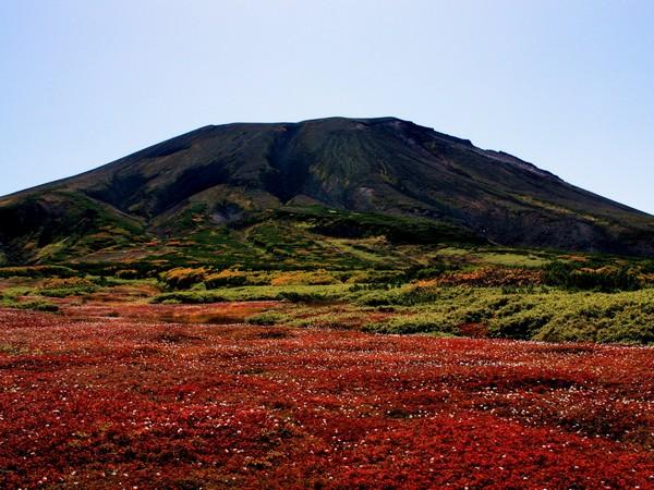 裾合平周辺の紅葉チングルマの草紅葉はまるで真っ赤なじゅうたんのよう