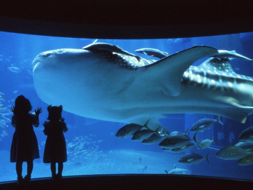 世界最大の水族館「海遊館」では、生命のすばらしさや不思議さを体感できます。