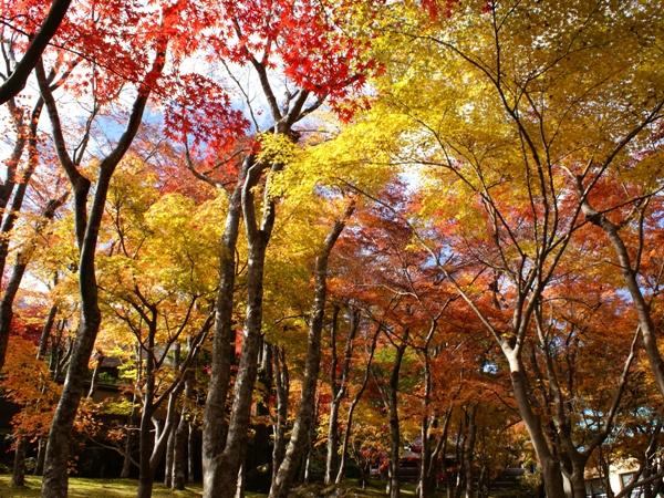 【箱根美術館】箱根で最も歴史ある美術館
