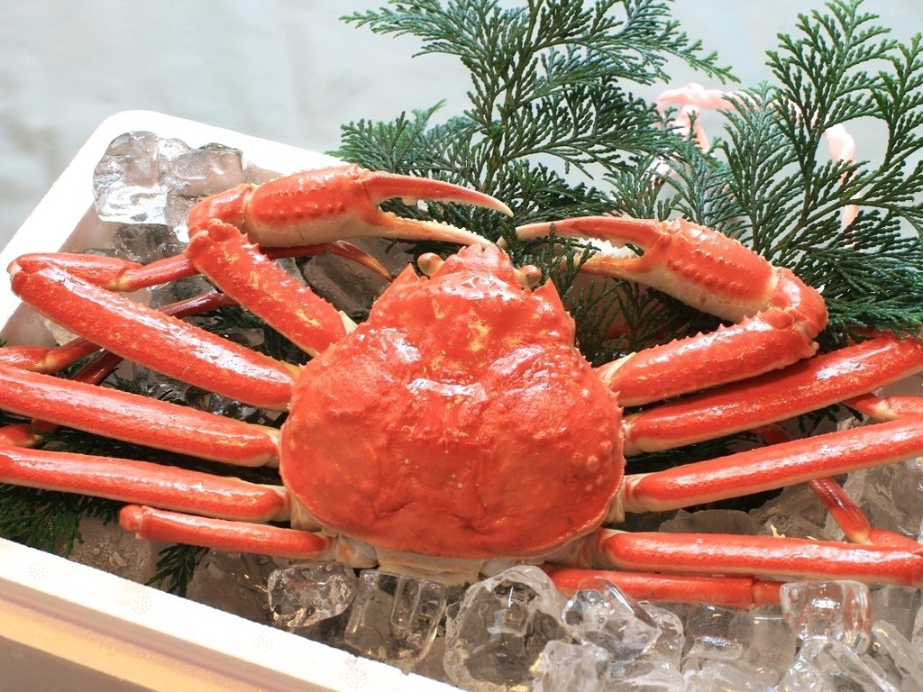 冬の王道・ズワイ蟹は、お1人様に1パイ!