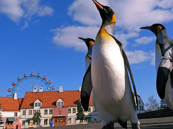 【登別マリンパークニクス】ペンギンのパレード