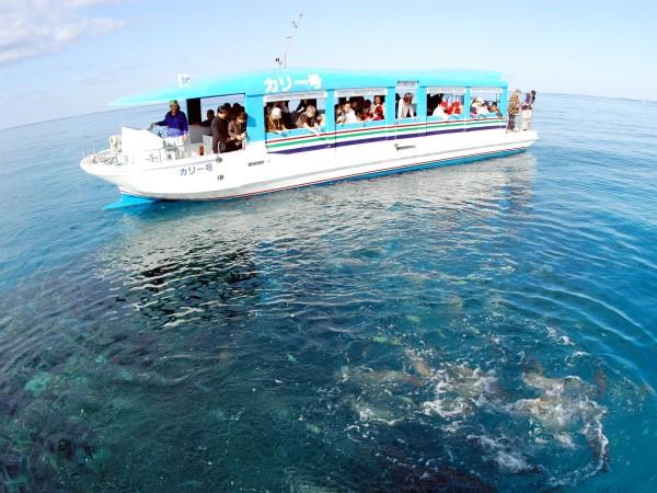 船の底がガラス張りになっていて、海中の熱帯魚がご覧いただけます。