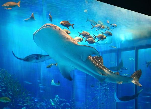 リピーターにも大人気!「美ら海水族館」入館チケット付き♪