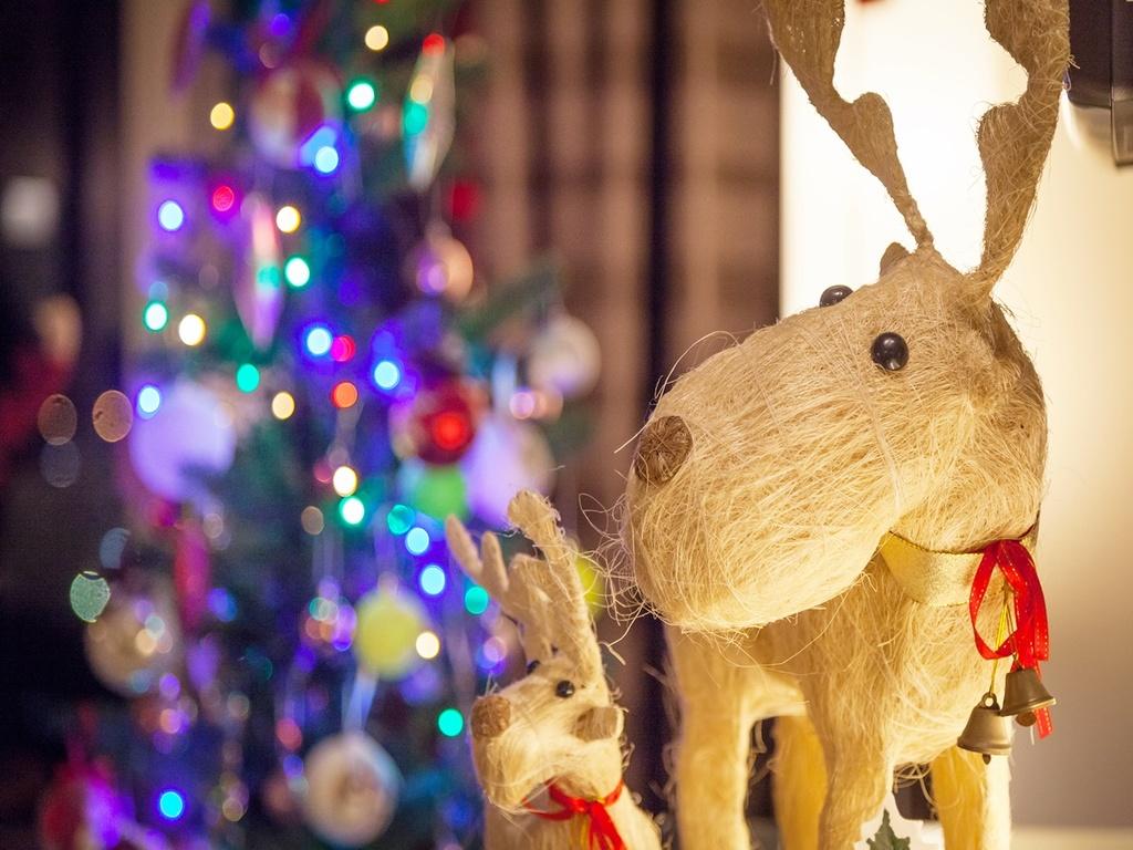 【1日3室限定】クリスマスプランが期間限定で登場!それぞれ違ったデコレーションが楽しめるクリスマスルーム★