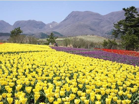 くじゅう花公園(春)