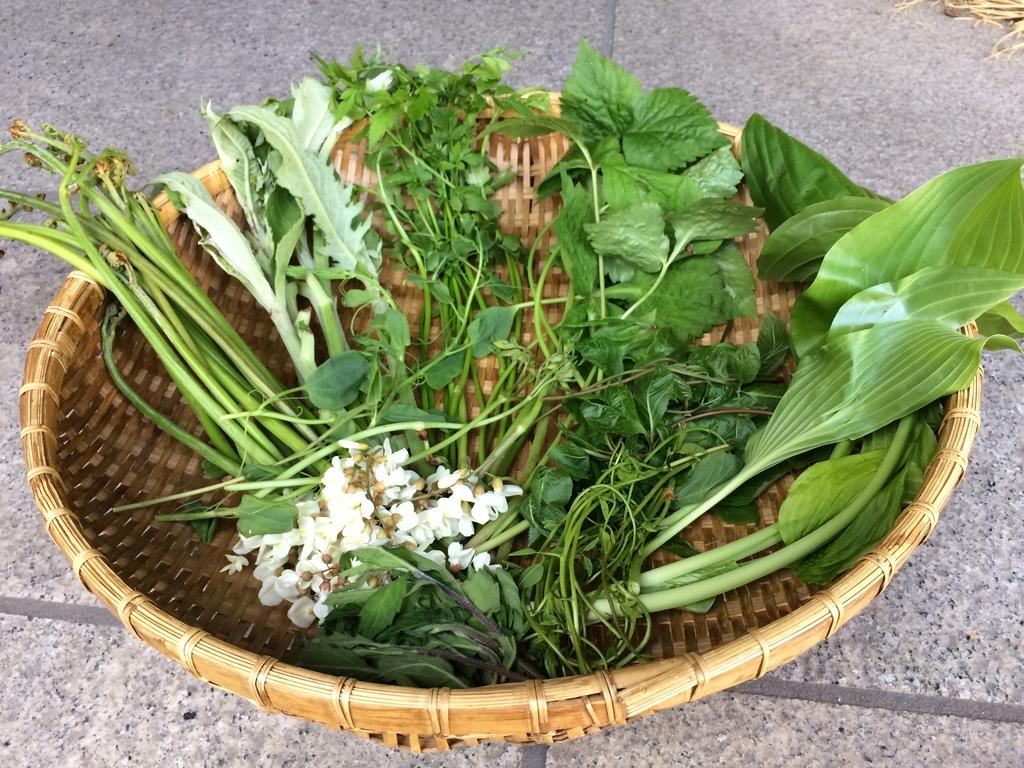 山菜を収穫