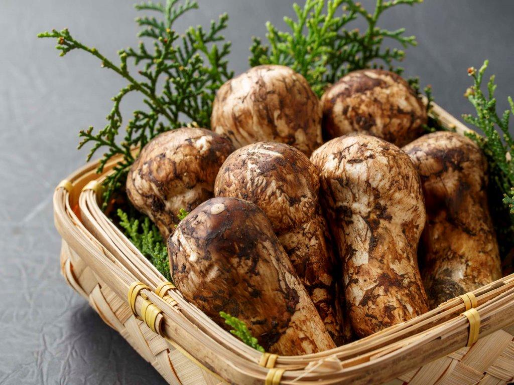 *【松茸料理】上品な香りの松茸をこちらのプランからお楽しみください。