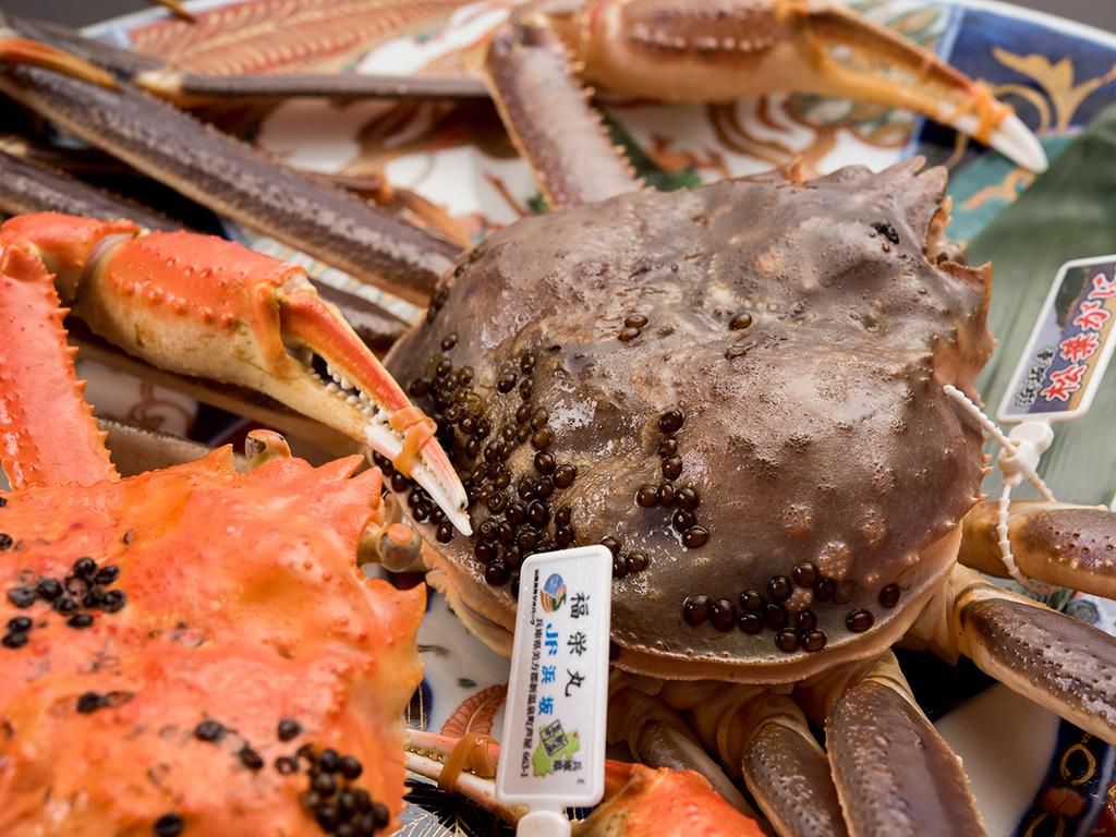 *【兵庫県浜坂産:松葉ガニ】国産ブランドズワイガニの松葉蟹を爪の先までお楽しみください