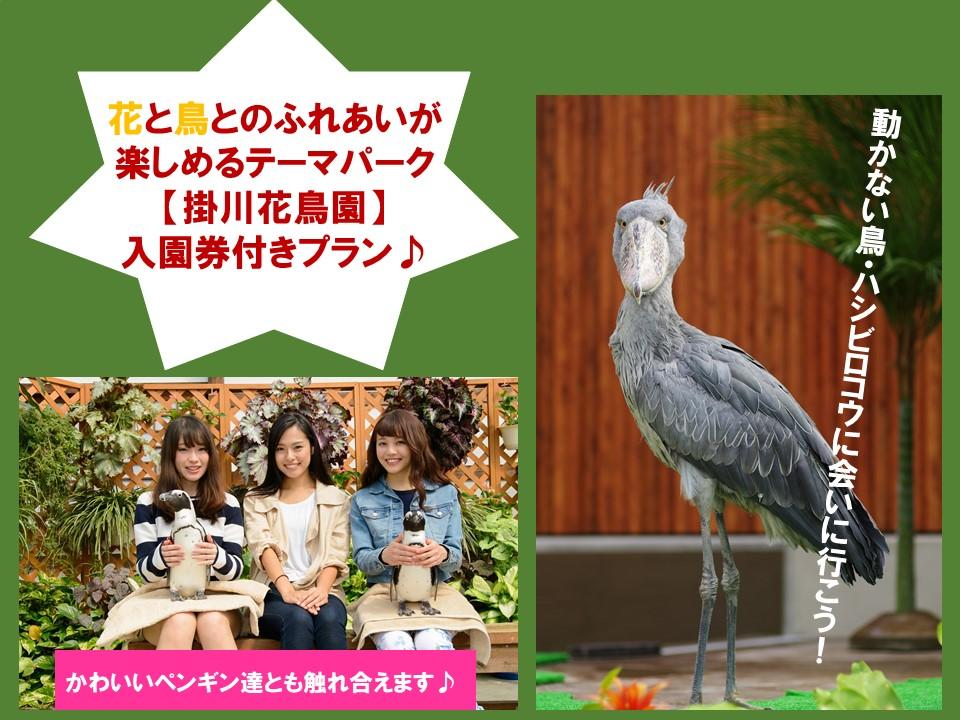 掛川花鳥園の入園券がセットになったお得なプランです♪