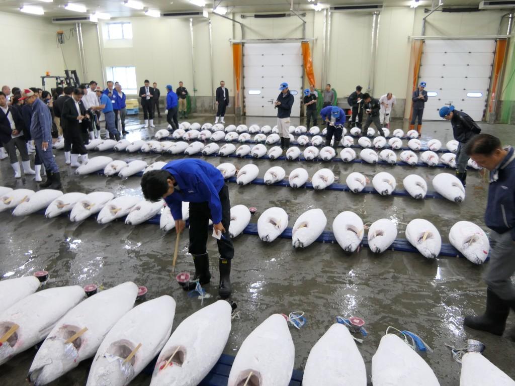 魚市場で行われるマグロのセリを見学!