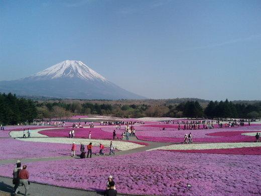 富士芝桜まつり 4月中旬〜5月下旬