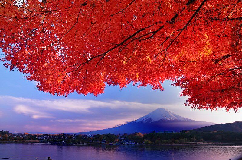 ≪秋の紅葉と富士山≫