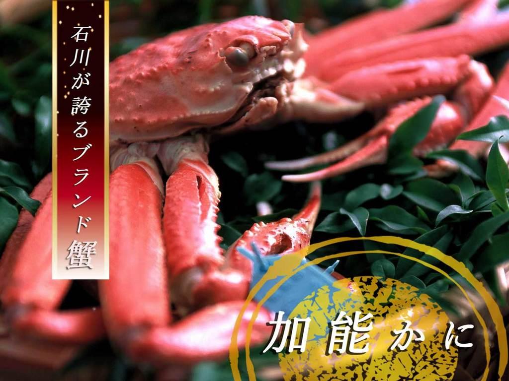 ◆日本海の蟹の王様!加能かに◆極上のカニにだけ許される【青タグ】。美味しさの証です。