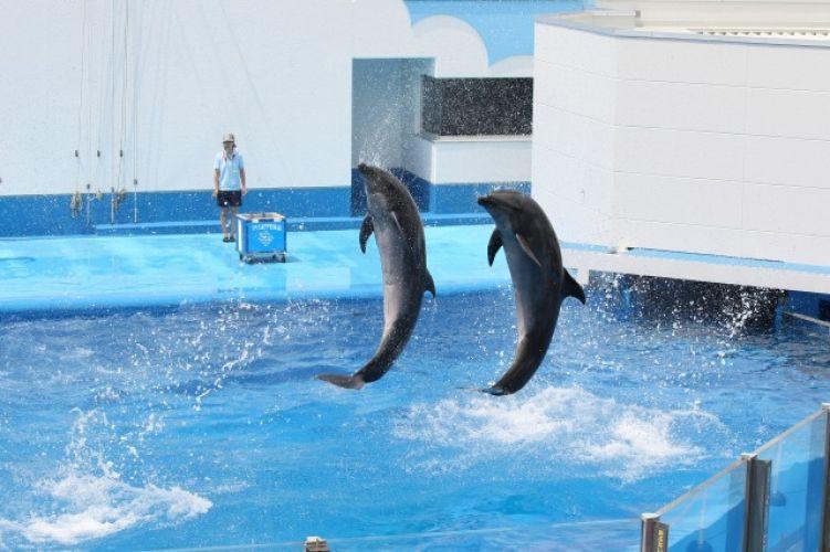 躍動感あふれるイルカのショー