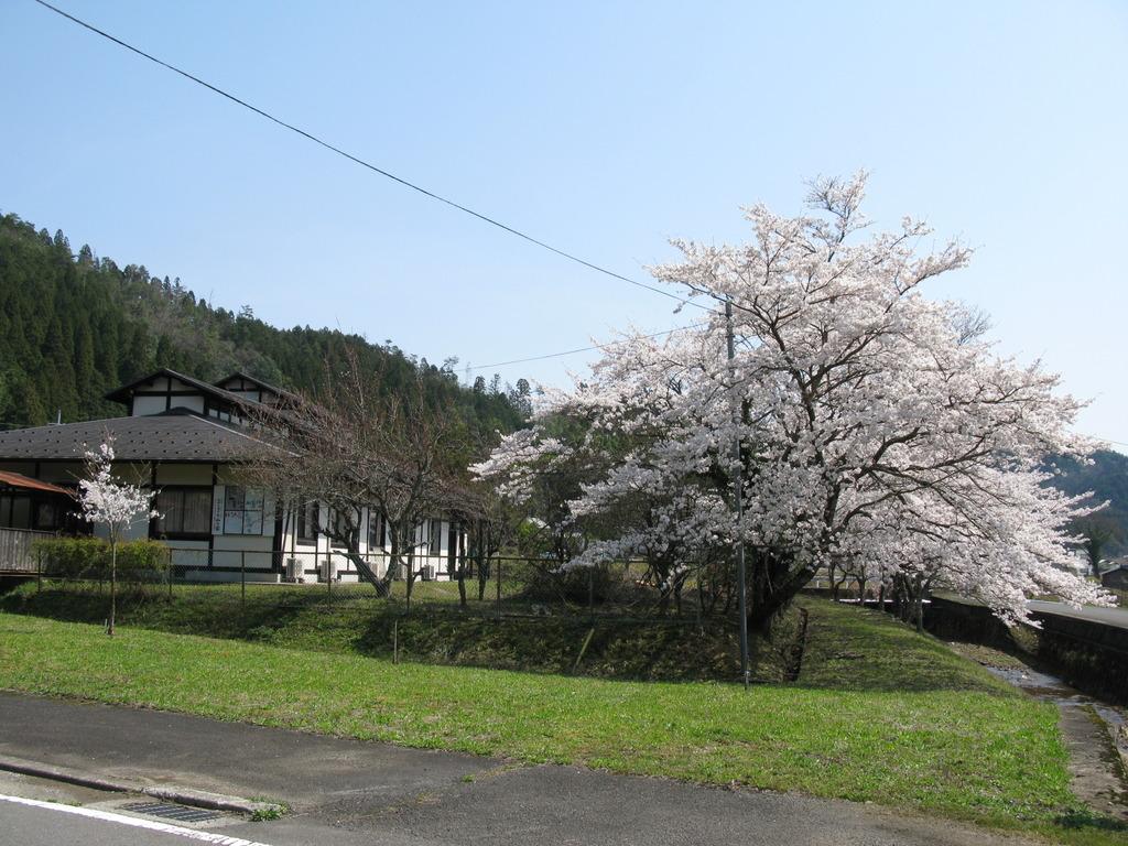 山の家前の桜