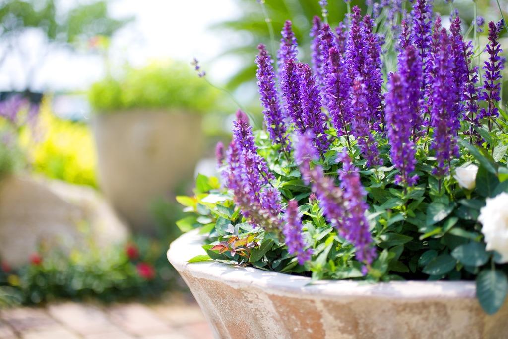 レストラン前ガーデニング。四季折々の色鮮やかな花が季節を感じさせてくれます。