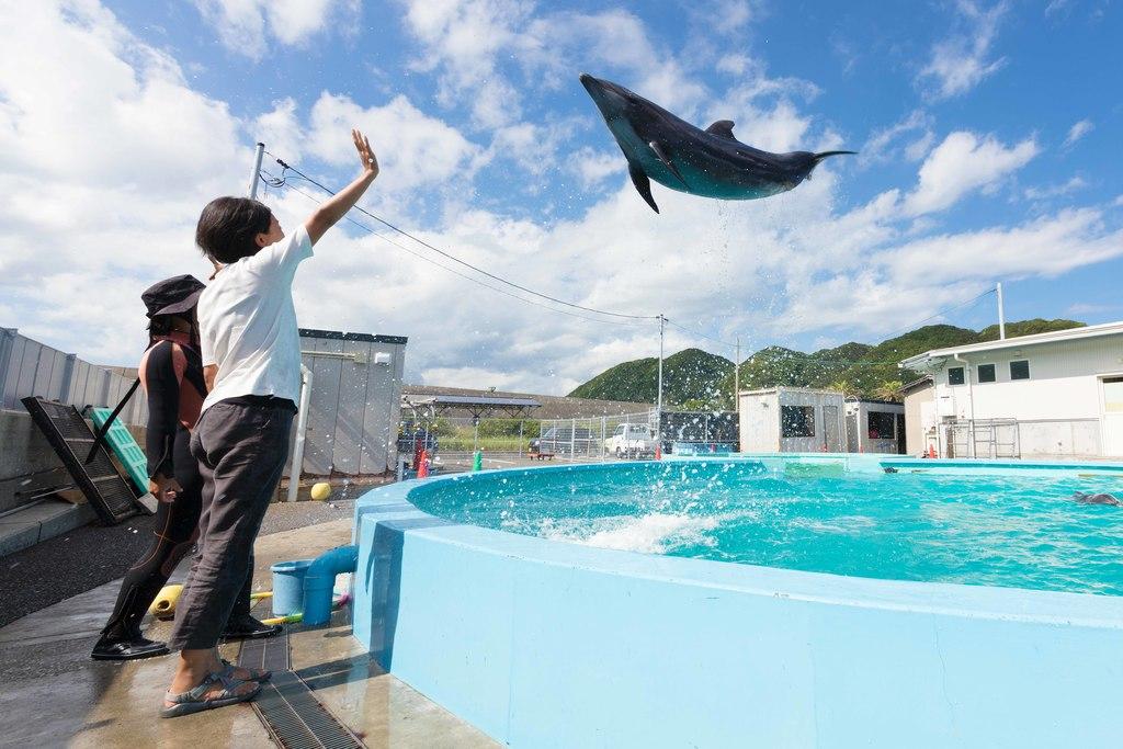 イルカと触れ合える☆ドルフィンセンター
