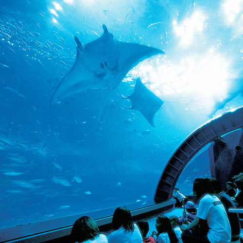 美ら海水族館�A