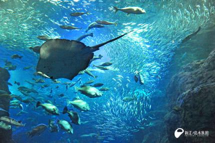 新江ノ島水族館イメージ1