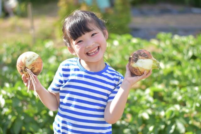 野菜収穫(イメージ)