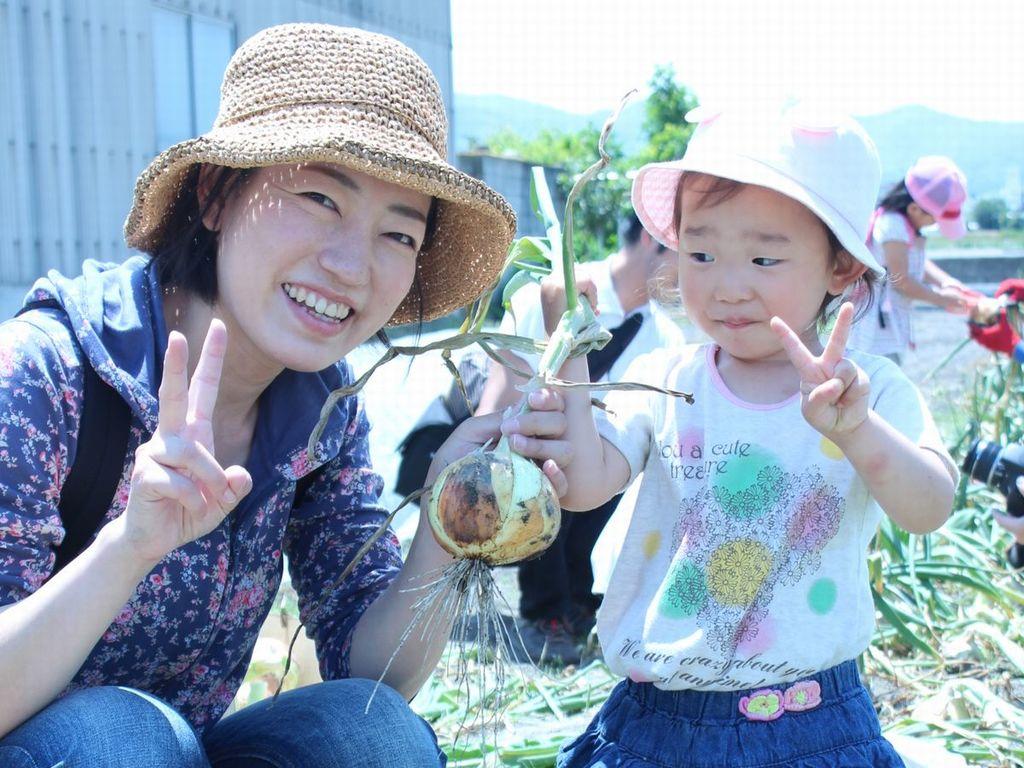 玉葱収穫体験2
