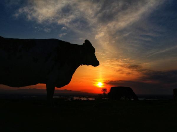 【ハイジ牧場】夕焼けと牛さん