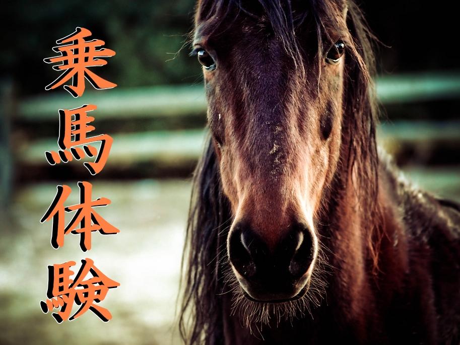今こそ、乗馬体験♪