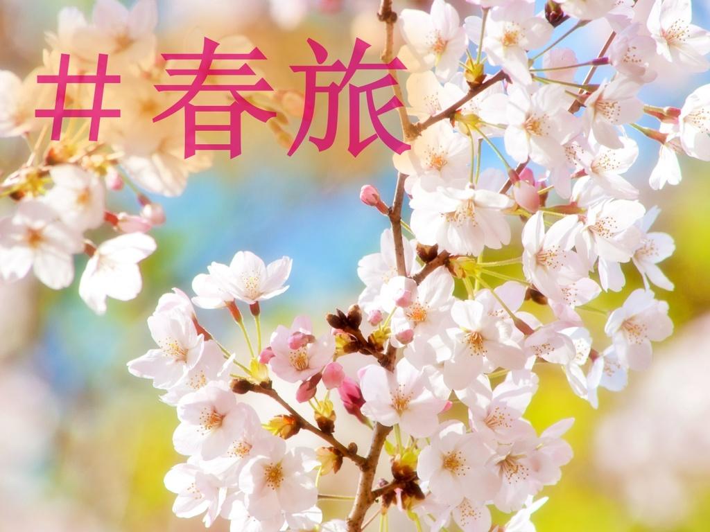 お得に旅しよう!春旅プラン!