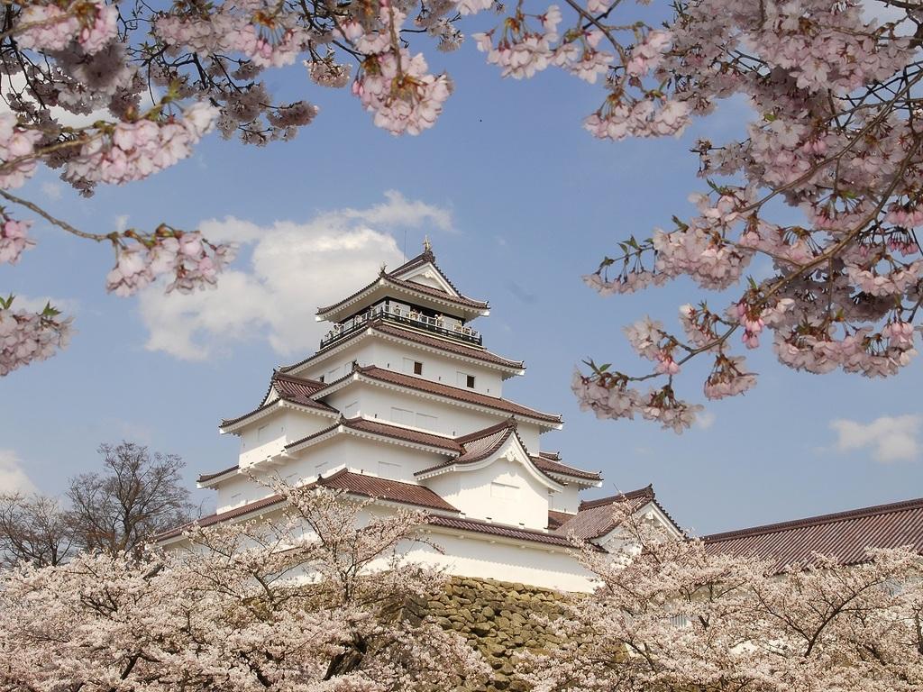 会津若松城(鶴ヶ城)の桜。当ホテルから車で約60分