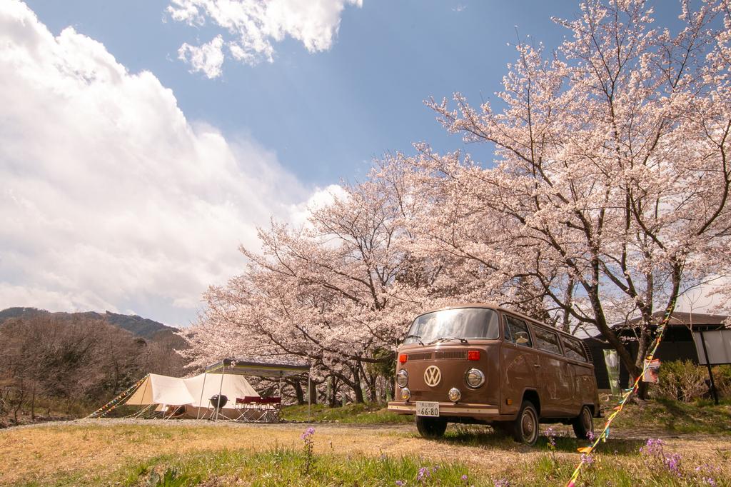 桜並木が満開に咲き誇ります