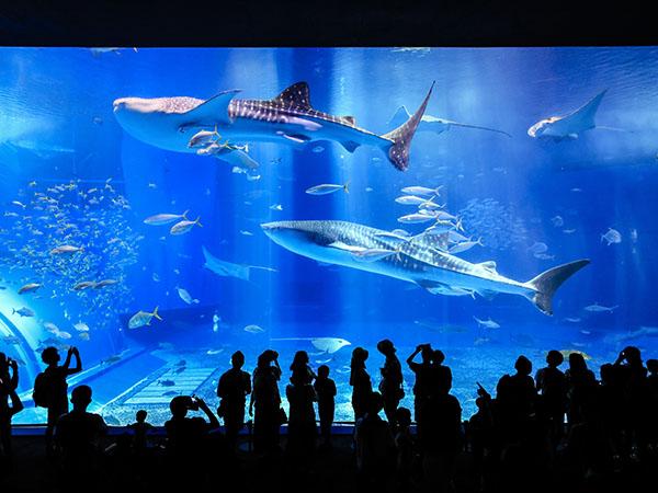沖縄美ら海水族館(海洋博公園内) ホテルから徒歩圏内
