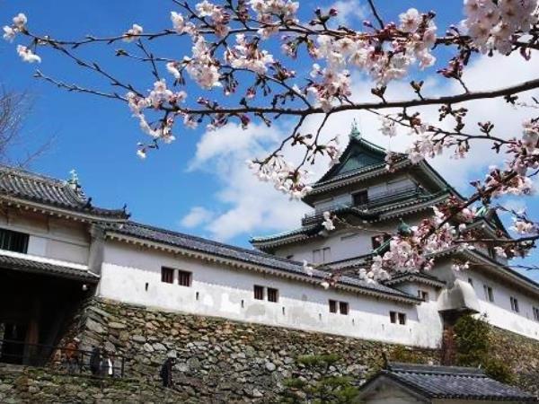 和歌山城(桜)