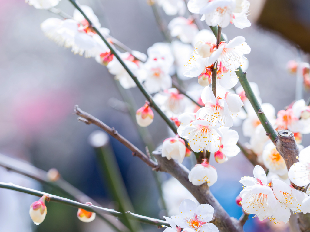 桜の季節到来♪