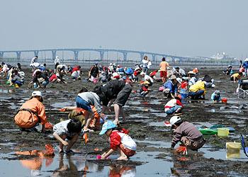 初夏☆千葉ならではの潮干狩り♪おすすめコースは【木更津で潮干狩り→東京湾アクアライン】車で海を横断!