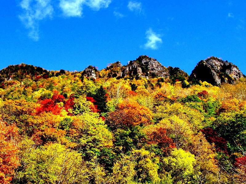 黒岳は日本で最も早く紅葉が始まり、色鮮やかに染まります
