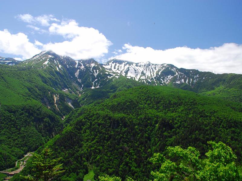 【黒岳】緑豊かな夏の黒岳