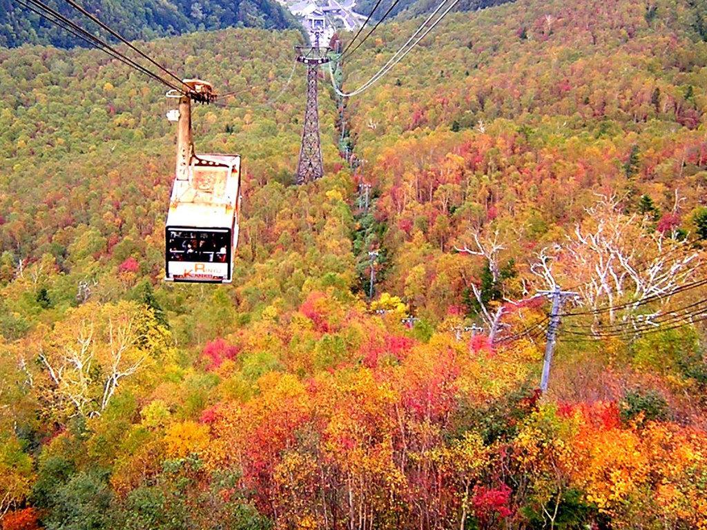 【黒岳ロープウェイ(秋)】紅や黄色、色とりどりの風景に囲まれ、紅葉を存分に感じられます。