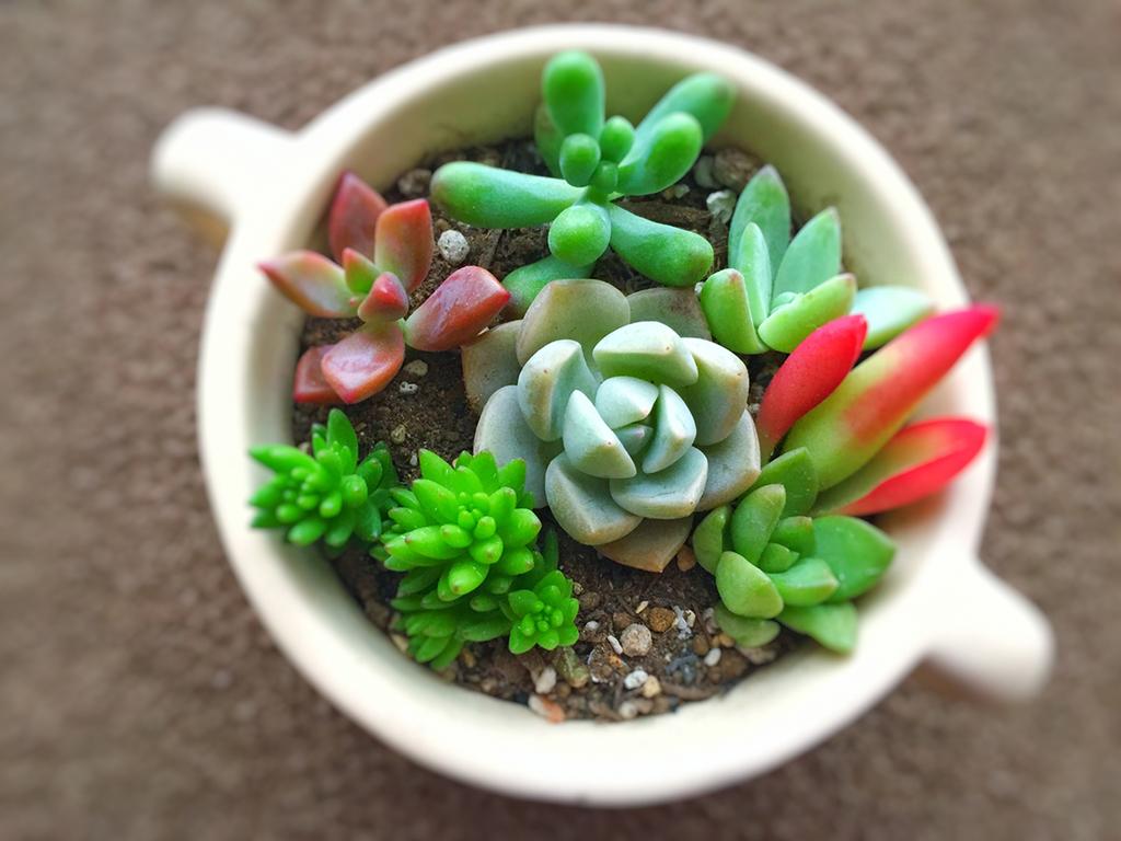 自分だけのオリジナル観葉植物を作ってみよう(イメージ)