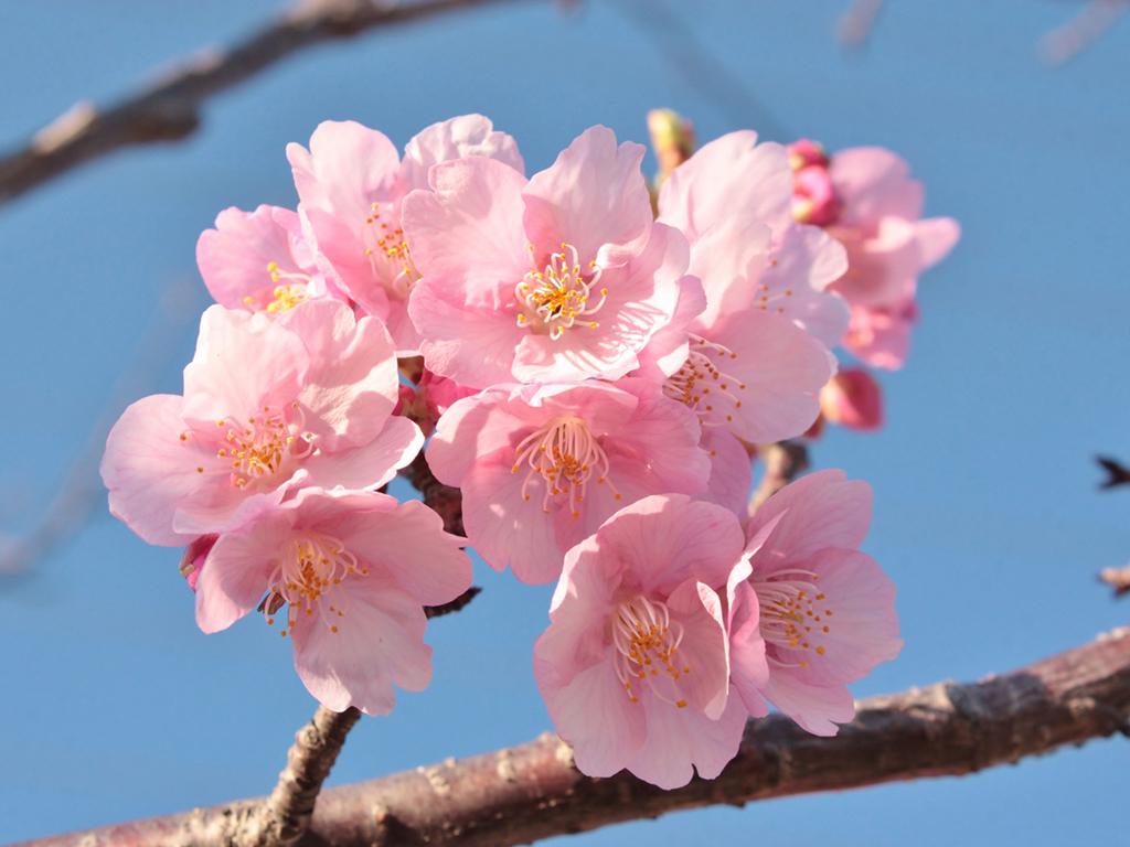 春の温泉旅をゆっくり楽しみましょう(桜イメージ)
