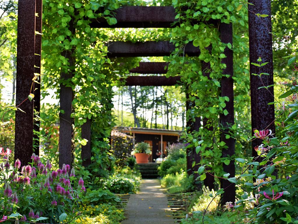 【大雪森のガーデン】森の花園/緑に包まれた居心地の良い空間(7月)